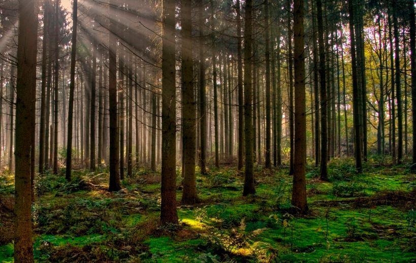 Requisitos para ser guarda forestal