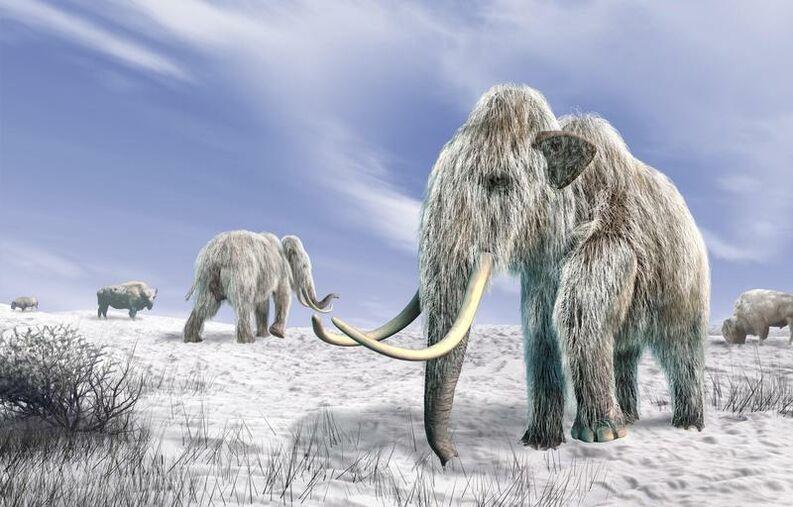 mamuts durante la glaciacion
