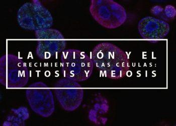 La división y el crecimiento de las células: Mitosis y Meiosis