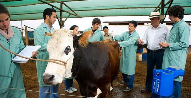 Dónde estudiar medicina veterinaria