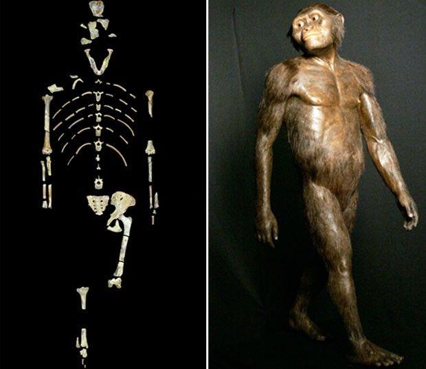 lucy, australopithecus