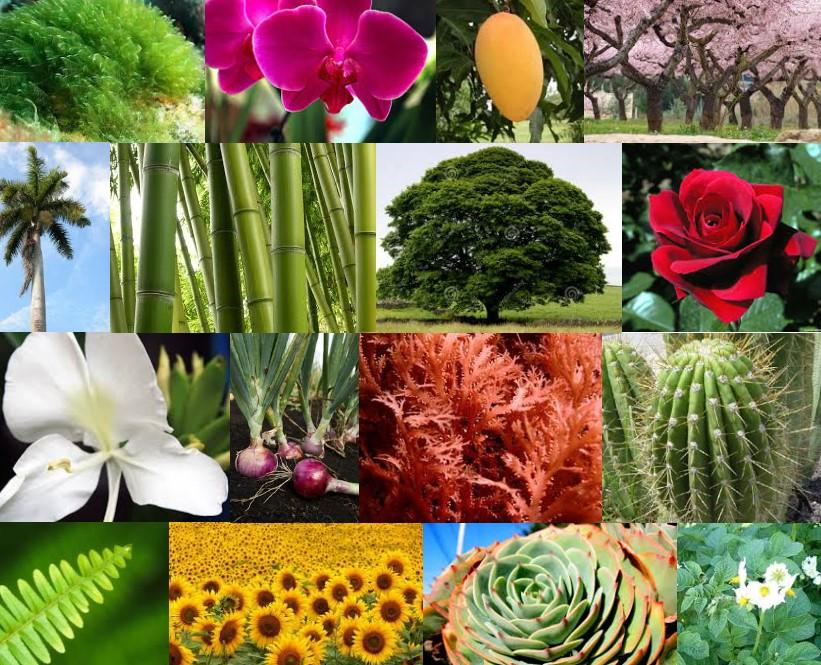 reino de las plantas